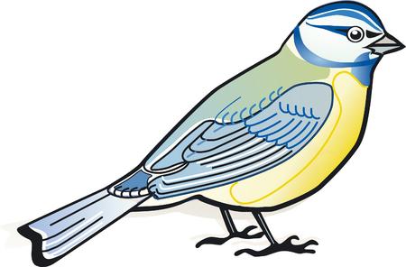 chickadee: tit  Illustration