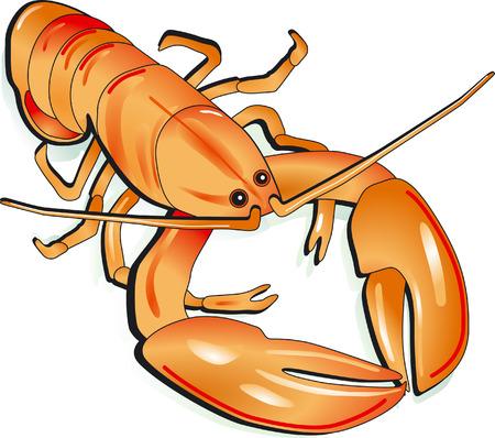 lobster  Stock Vector - 6594252