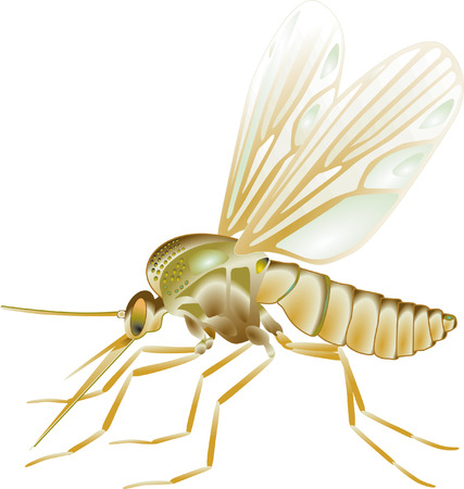 insecticide: gnat  Illustration