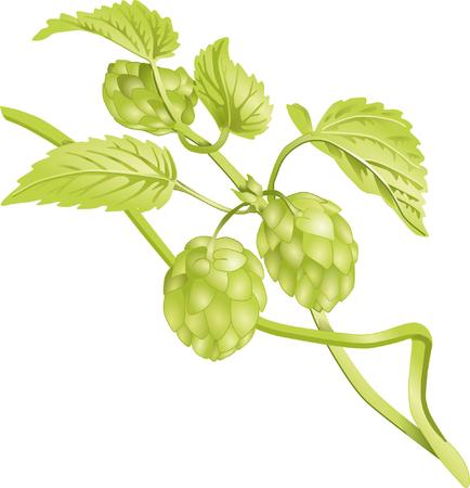 hops: hop