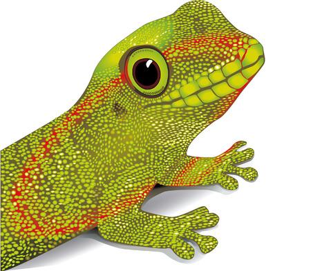 newt: gecko vektor