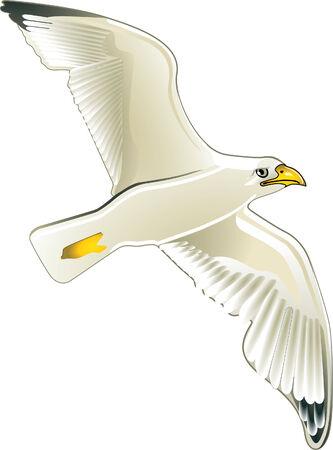 meer: seagul Illustration