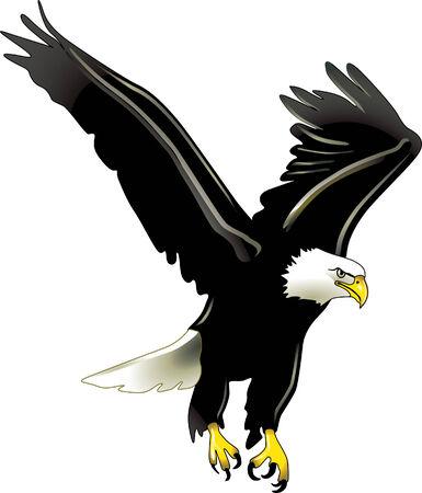 eagel