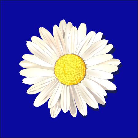 daisy  Stock Vector - 6630186