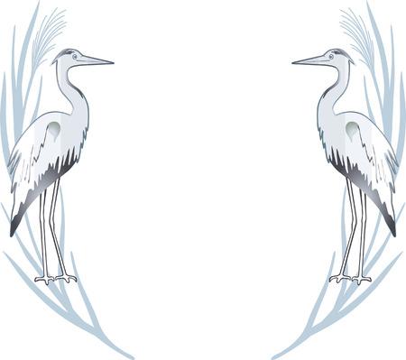 gray herons:  egret  Illustration