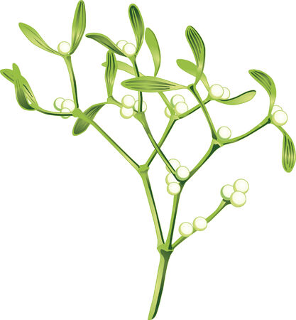 mistletoe  Stock Vector - 6630194
