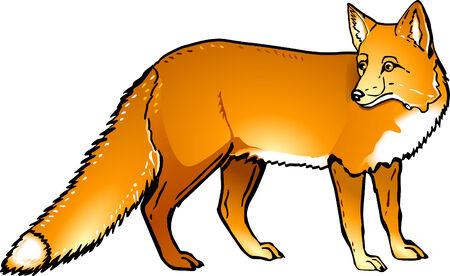fox  Ilustrace