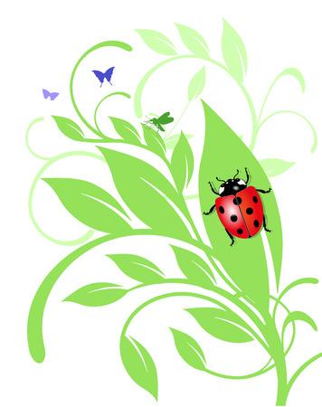 ladybird on trailing plant Stock Vector - 6630323