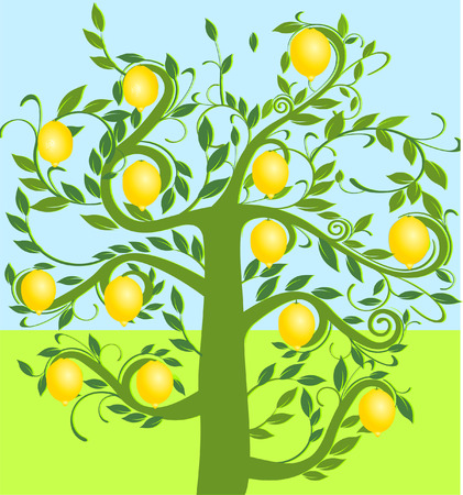 lemon tree: �rbol de lim�n