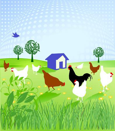 forage: chicken run