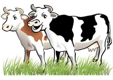 dairy cattle: 2 happy cows  Illustration