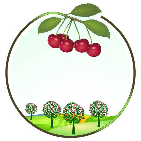 Cherry Kultur Vektorgrafik