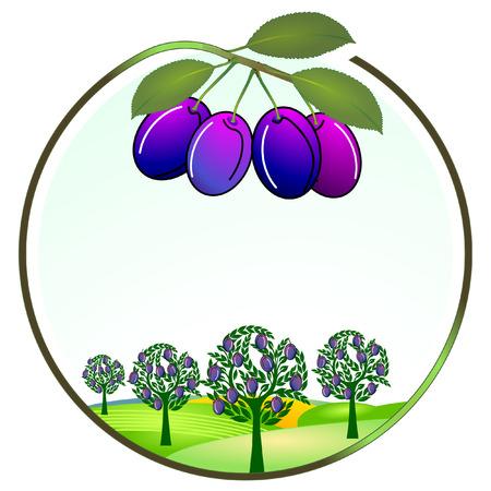 agrio: cultivo de ciruela