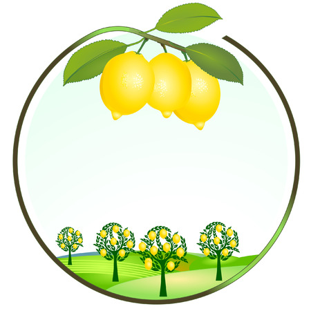 lemon cultivation Illustration