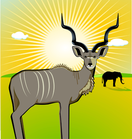 A Male Kudu Vector
