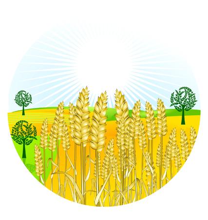 grain harvest Stock Vector - 7385340