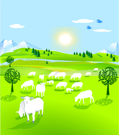 grazing: flock of sheep