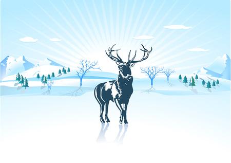 alce: Cervo di inverno