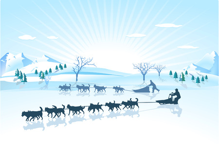 dog sled: Huskies sled dog Illustration
