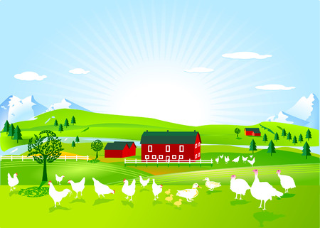 poultry farm Stock Vector - 7804472