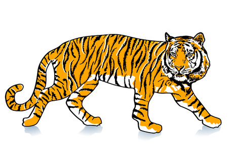 siberian tiger: sneak Tiger