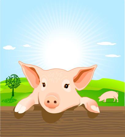 jeune pig