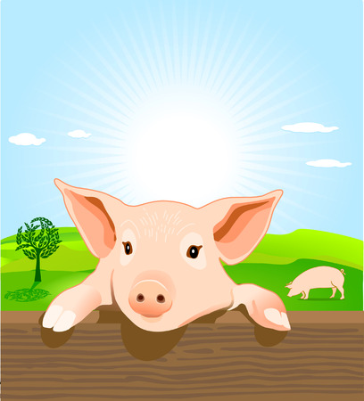 young pig Stock Vector - 8098916