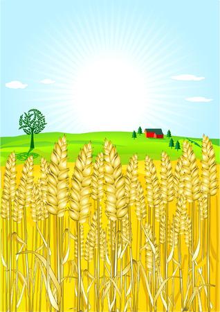 grain-field Vettoriali