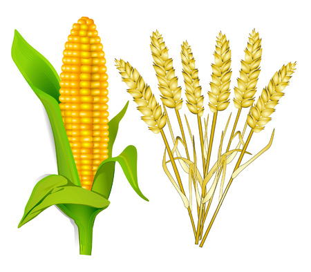 corn and grain Stock Vector - 8268283