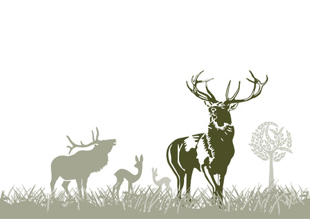 wild animal, deers Stock Vector - 8593834