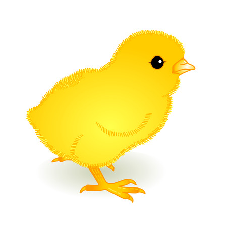 yellow fledgling Stock Vector - 8676530