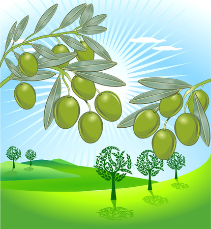 olive and freshly harvested olives Stock Vector - 8753050