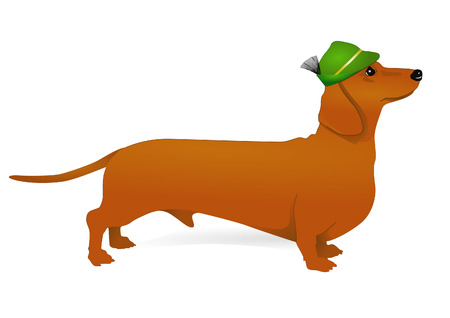 tirol: dachshund Illustration