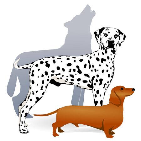 Lobo, raza de perros Ilustración de vector