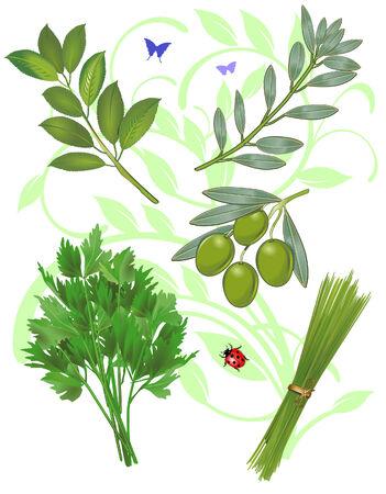 savoury: Fresh herbs collection