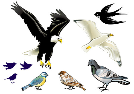 sparrows: birds on white Illustration