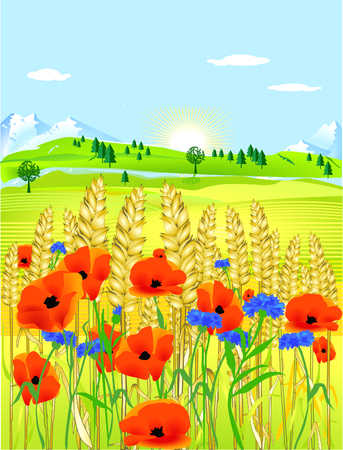 grainfield with flowers Vector