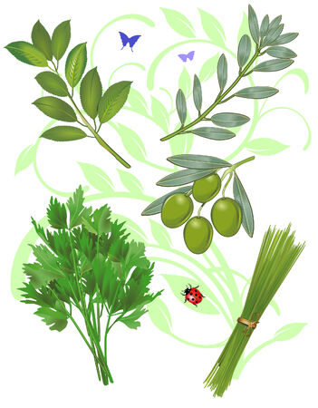 chives: green herbs Illustration