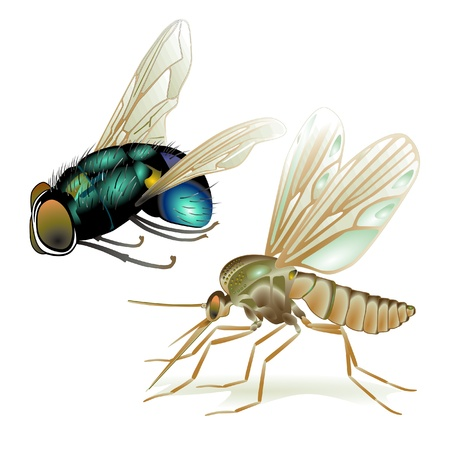 cockroach: mosquitoes and flies