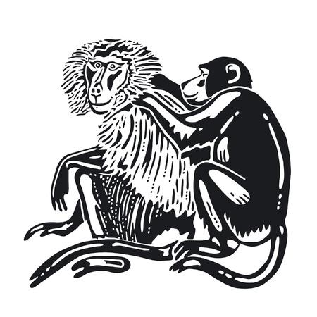 louse: Monkeys