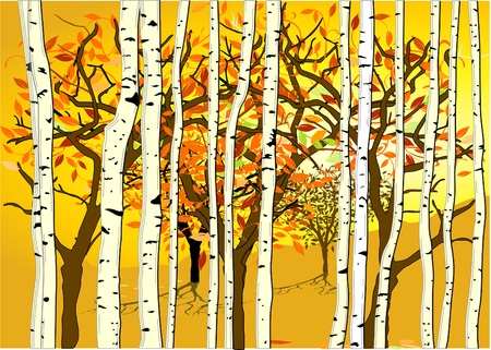 birch forest: Autumn mood