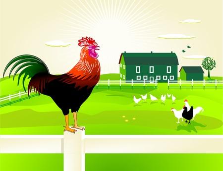 rooster at dawn: cazzo con la sua fattoria Vettoriali