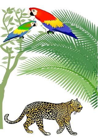 Parrot and Jaguar Vector