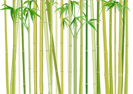원예: bamboo 일러스트