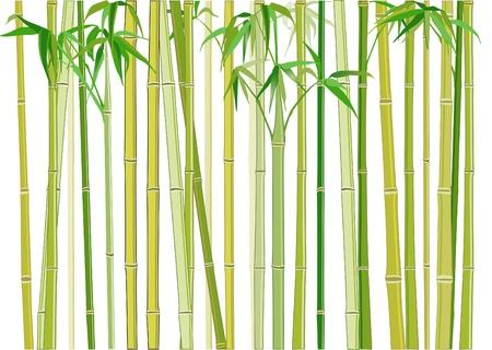 japanese motif: bamboo Illustration