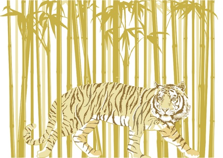 danger to life: Tiger in Bamboo Forest Illustration