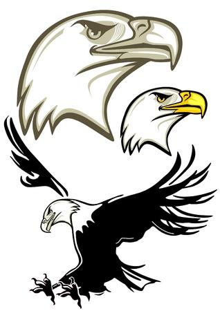 booty: Eagle Head, Eagle