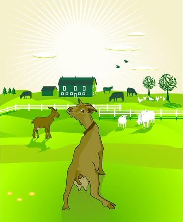 sheep barn: goats Illustration