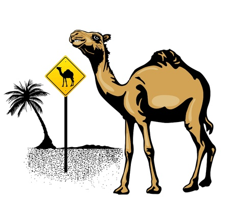 Character camel