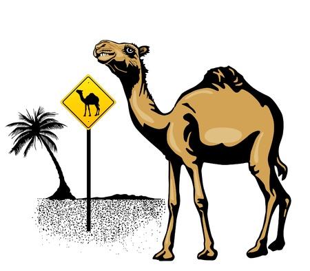 Karakter kameel